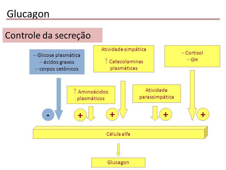 Glucagon Controle da secreção - + + + + Atividade simpática Cortisol