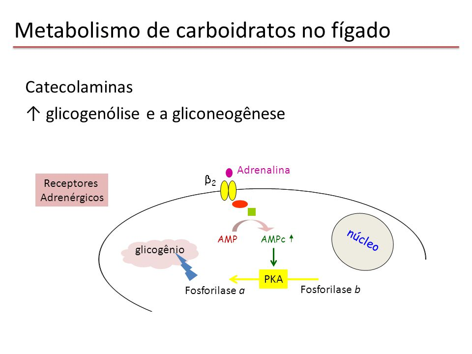 Metabolismo de carboidratos no fígado