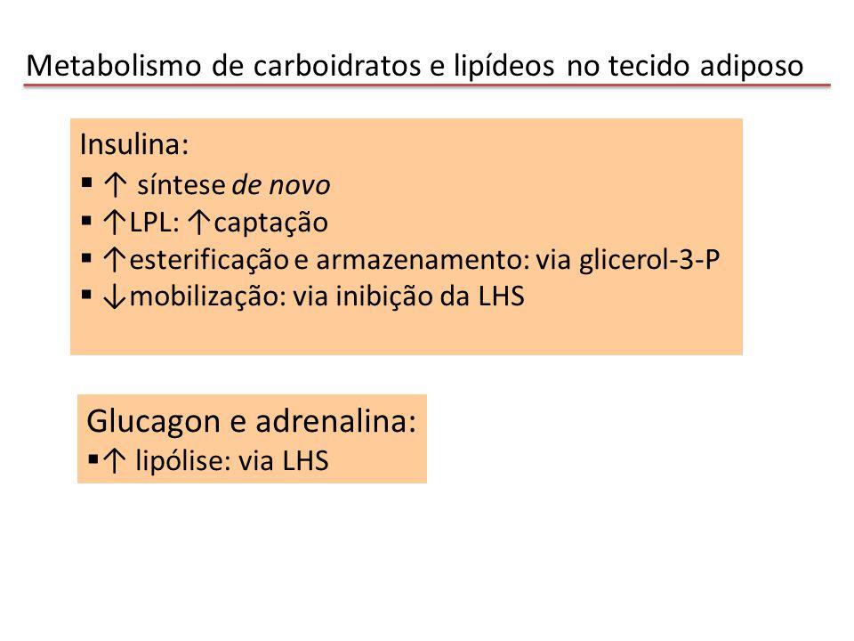 Glucagon e adrenalina: