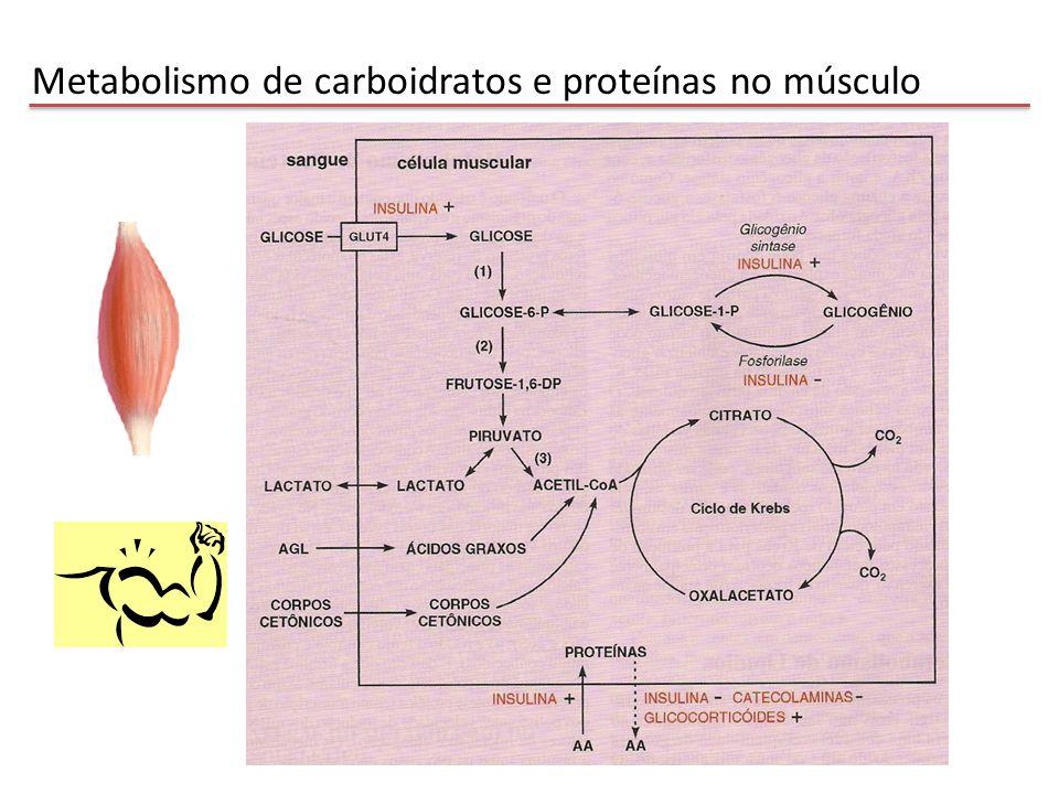 Metabolismo de carboidratos e proteínas no músculo