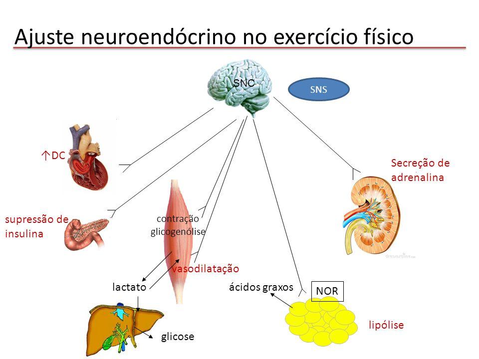 Ajuste neuroendócrino no exercício físico