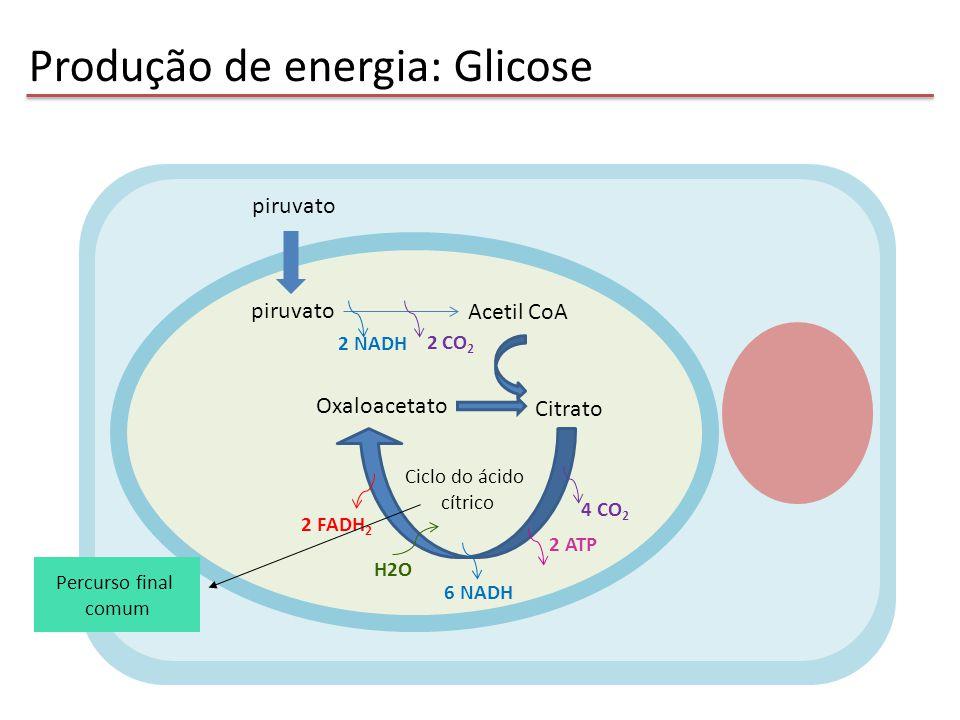 Produção de energia: Glicose