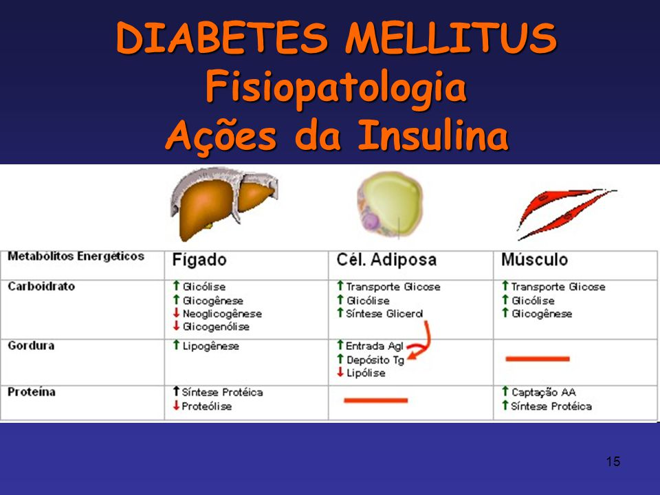 DIABETES MELLITUS Fisiopatologia Ações da Insulina