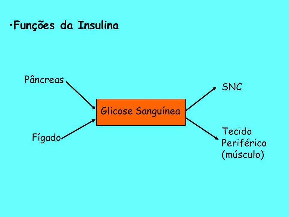 Funções da Insulina Pâncreas SNC Glicose Sanguínea Tecido Fígado