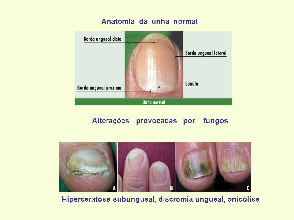 HOSPITAL UNIVERSITÁRIO ANTONIO PEDRO UFF ppt video online carregar