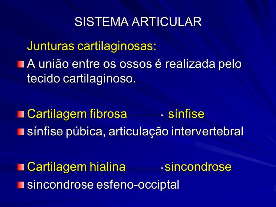SISTEMA ARTICULAR Junturas cartilaginosas: A união entre os ossos é realizada pelo tecido cartilaginoso.