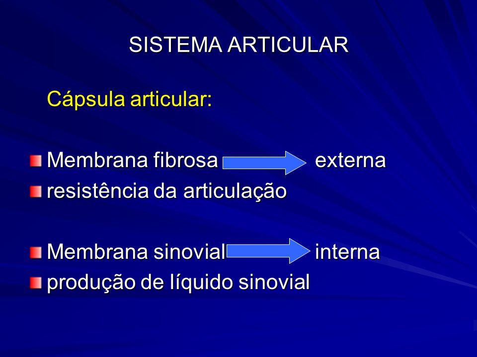 SISTEMA ARTICULAR Cápsula articular: Membrana fibrosa externa. resistência da articulação. Membrana sinovial interna.