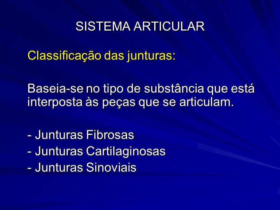SISTEMA ARTICULAR Classificação das junturas: Baseia-se no tipo de substância que está interposta às peças que se articulam.
