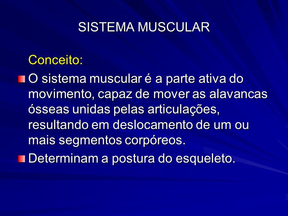 SISTEMA MUSCULAR Conceito: