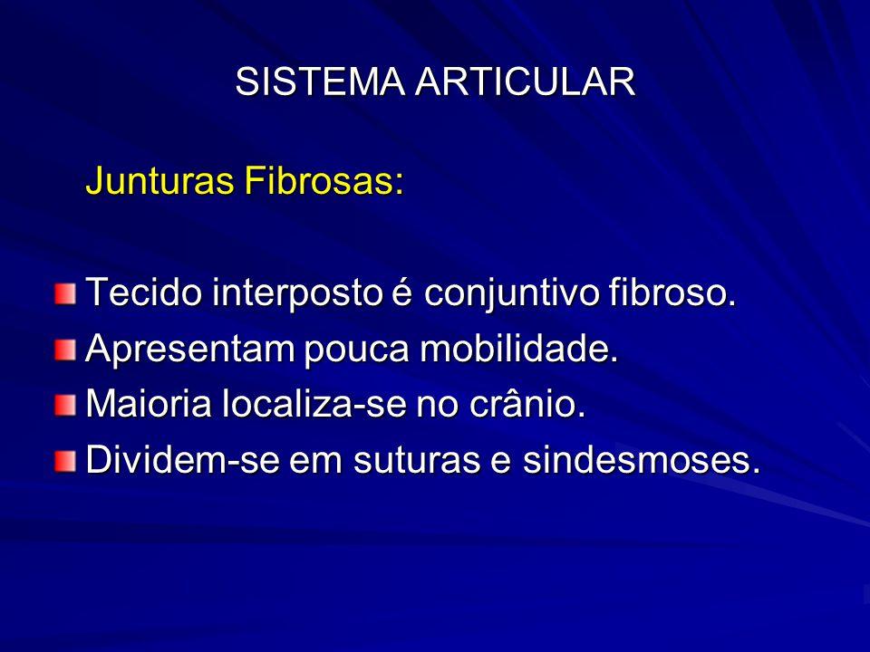 SISTEMA ARTICULAR Junturas Fibrosas: Tecido interposto é conjuntivo fibroso. Apresentam pouca mobilidade.
