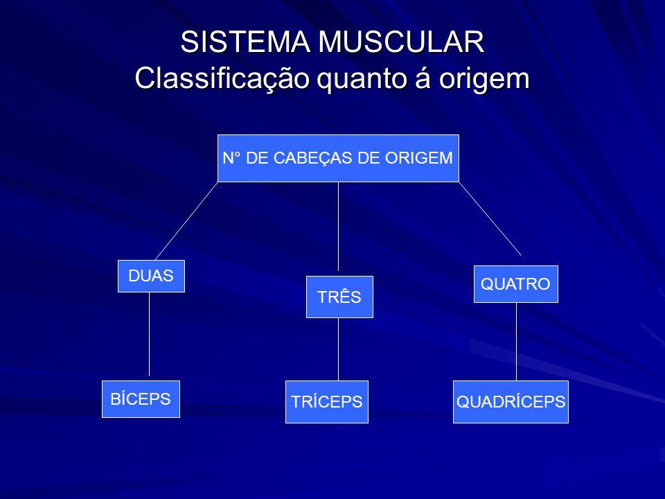 SISTEMA MUSCULAR Classificação quanto á origem
