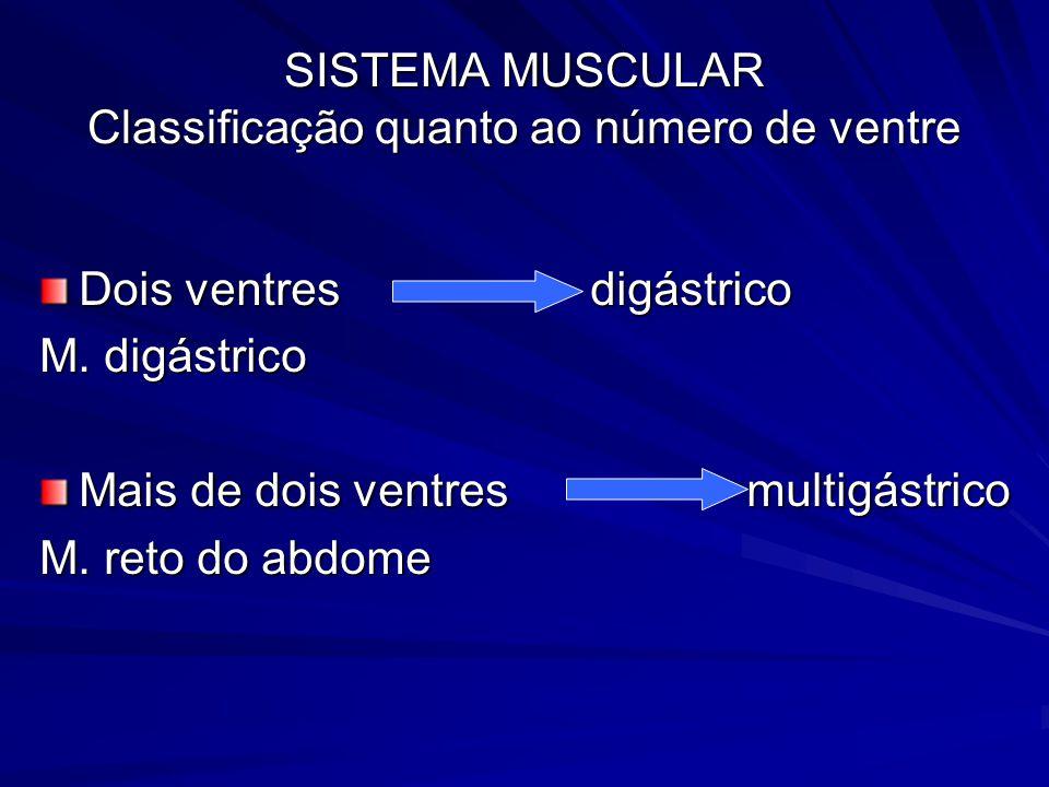 SISTEMA MUSCULAR Classificação quanto ao número de ventre