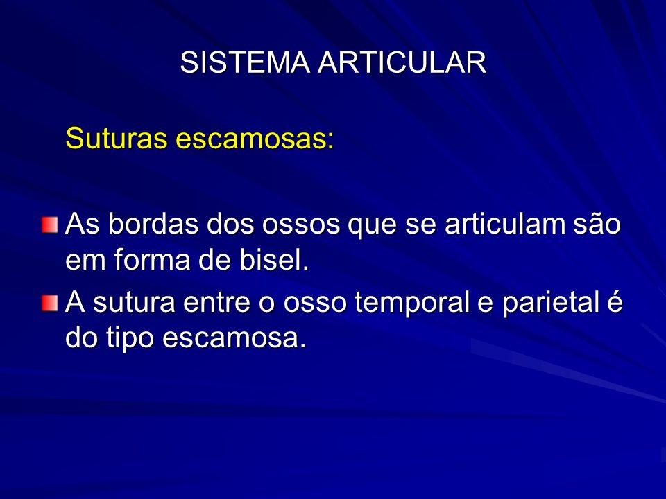 SISTEMA ARTICULAR Suturas escamosas: As bordas dos ossos que se articulam são em forma de bisel.