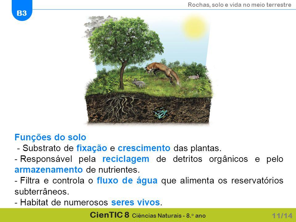 - Substrato de fixação e crescimento das plantas.