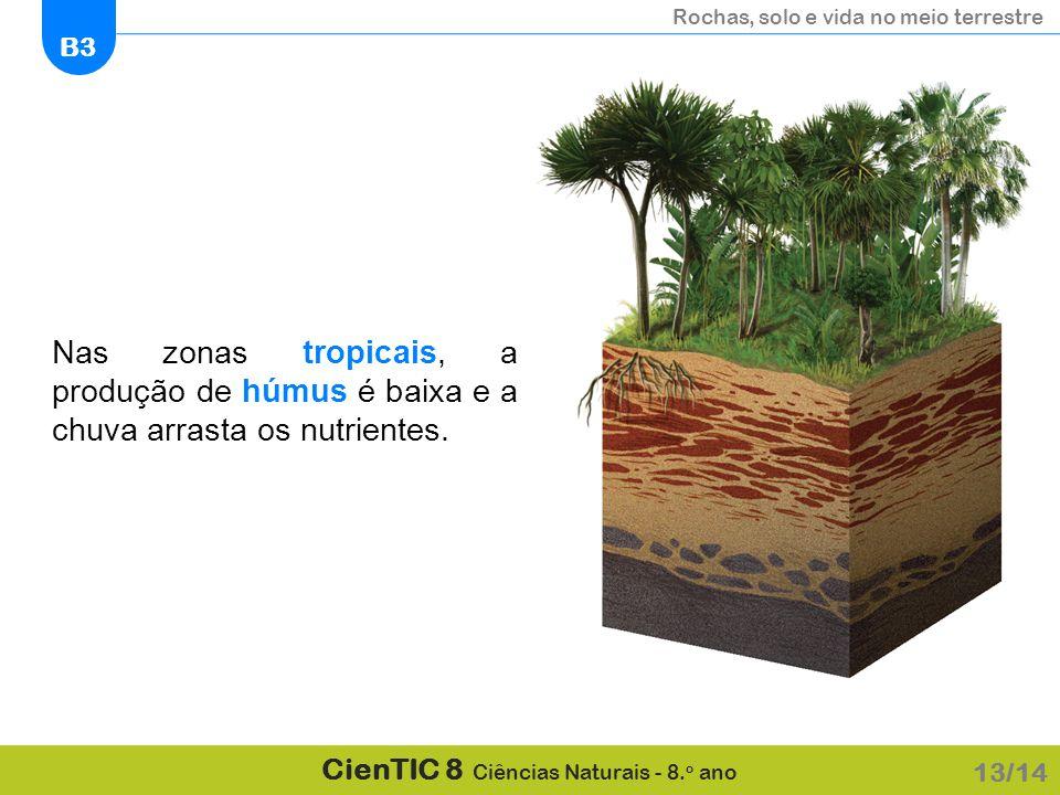 Nas zonas tropicais, a produção de húmus é baixa e a chuva arrasta os nutrientes.
