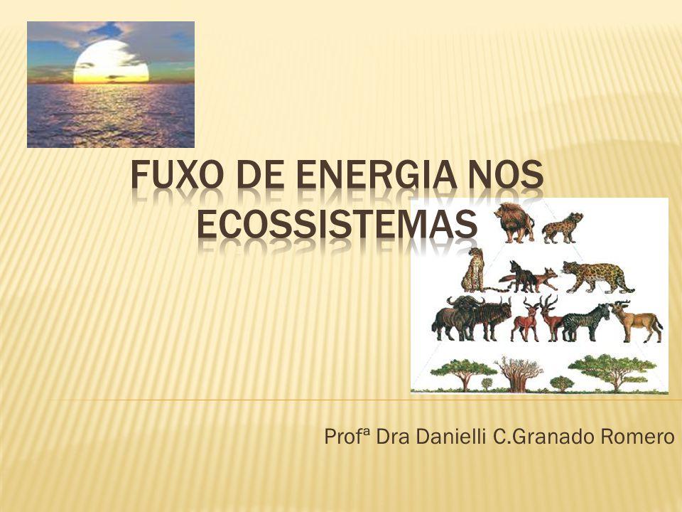 FUXO DE ENERGIA NOS ECOSSISTEMAS