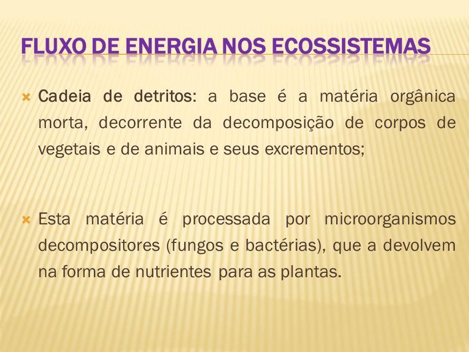 Cadeia de detritos: a base é a matéria orgânica morta, decorrente da decomposição de corpos de vegetais e de animais e seus excrementos;