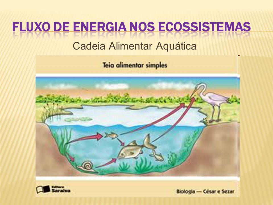 Cadeia Alimentar Aquática