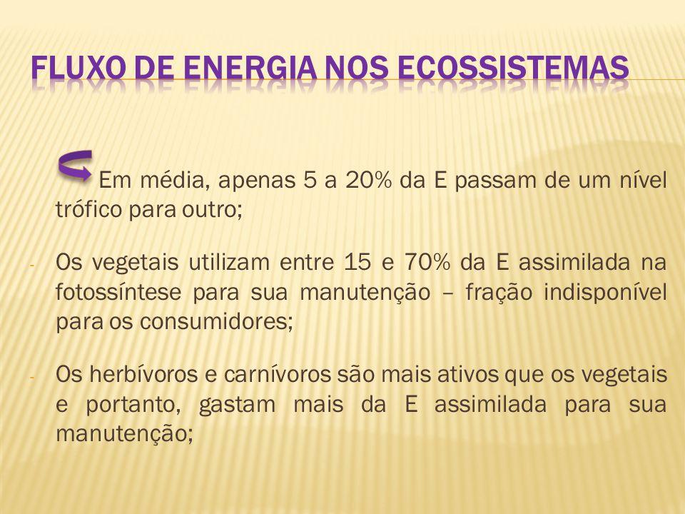 FLUXO DE ENERGIA NOS ECOSSISTEMAS