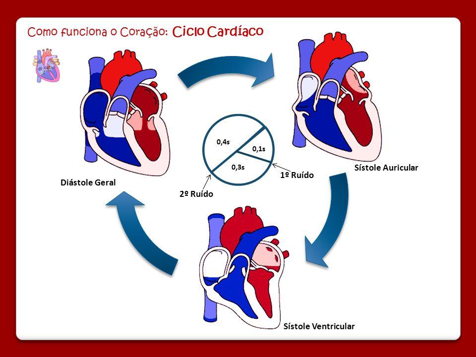 Como funciona o Coração: Ciclo Cardíaco