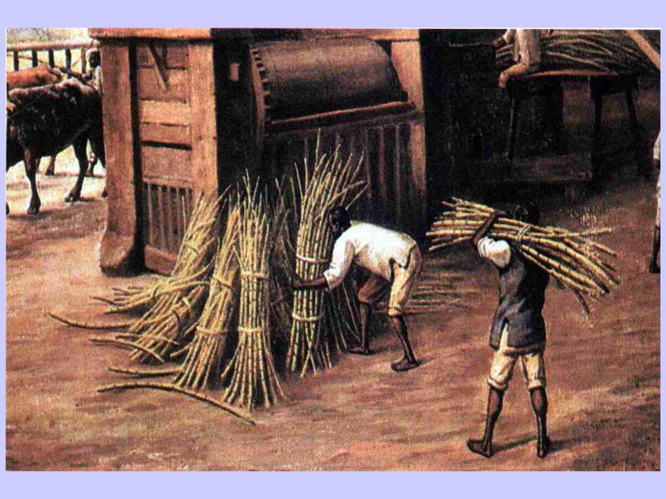 Trabalho escravo