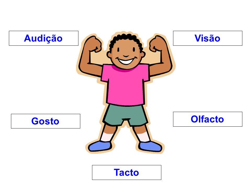 Audição Visão Olfacto Gosto Tacto