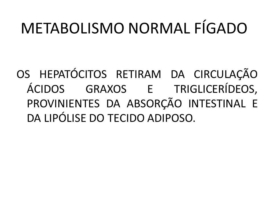 METABOLISMO NORMAL FÍGADO