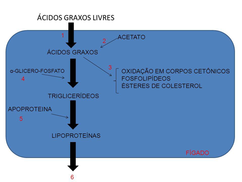 ÁCIDOS GRAXOS LIVRES 1 ACETATO 2 ÁCIDOS GRAXOS 3