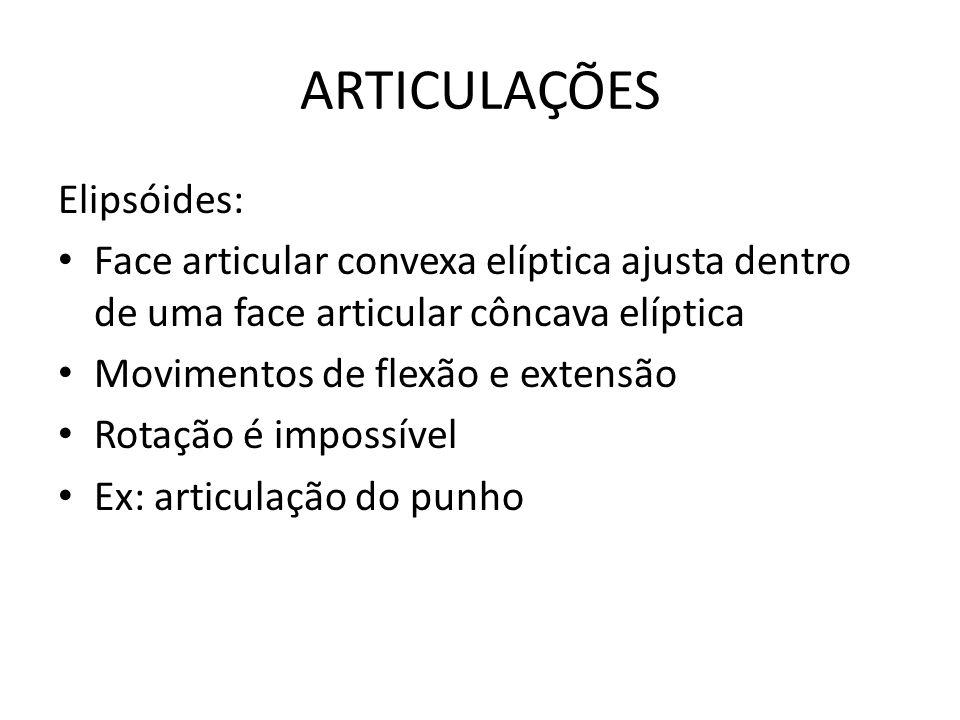 ARTICULAÇÕES Elipsóides: