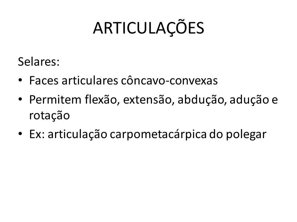 ARTICULAÇÕES Selares: Faces articulares côncavo-convexas