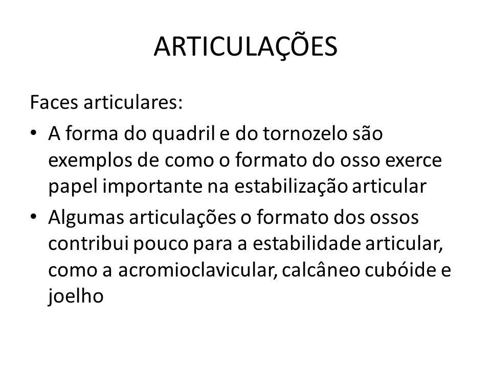 ARTICULAÇÕES Faces articulares: