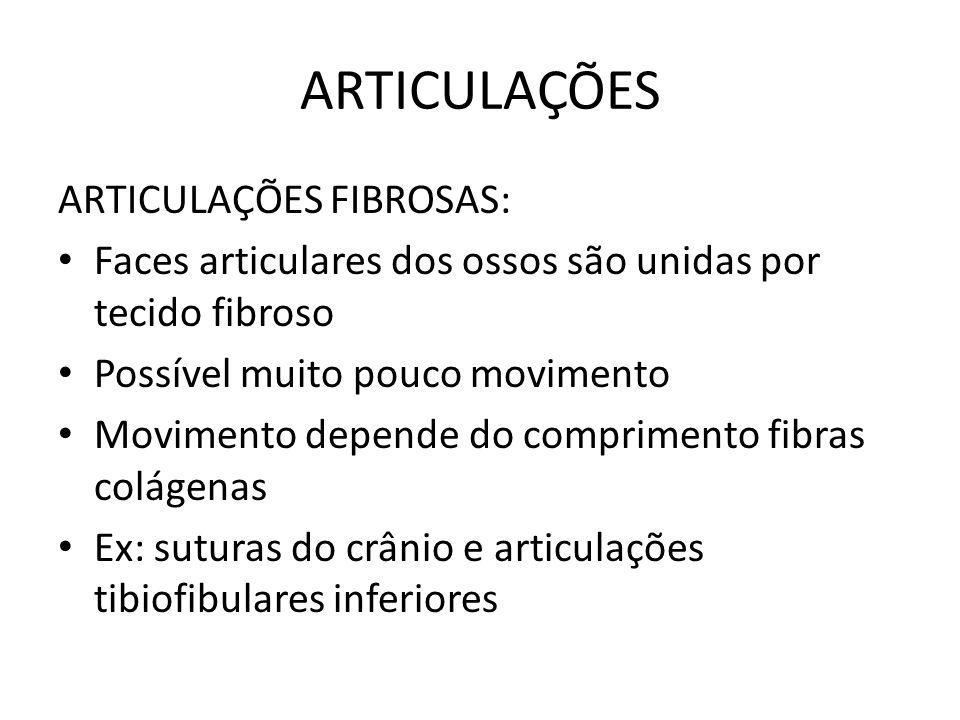 ARTICULAÇÕES ARTICULAÇÕES FIBROSAS: