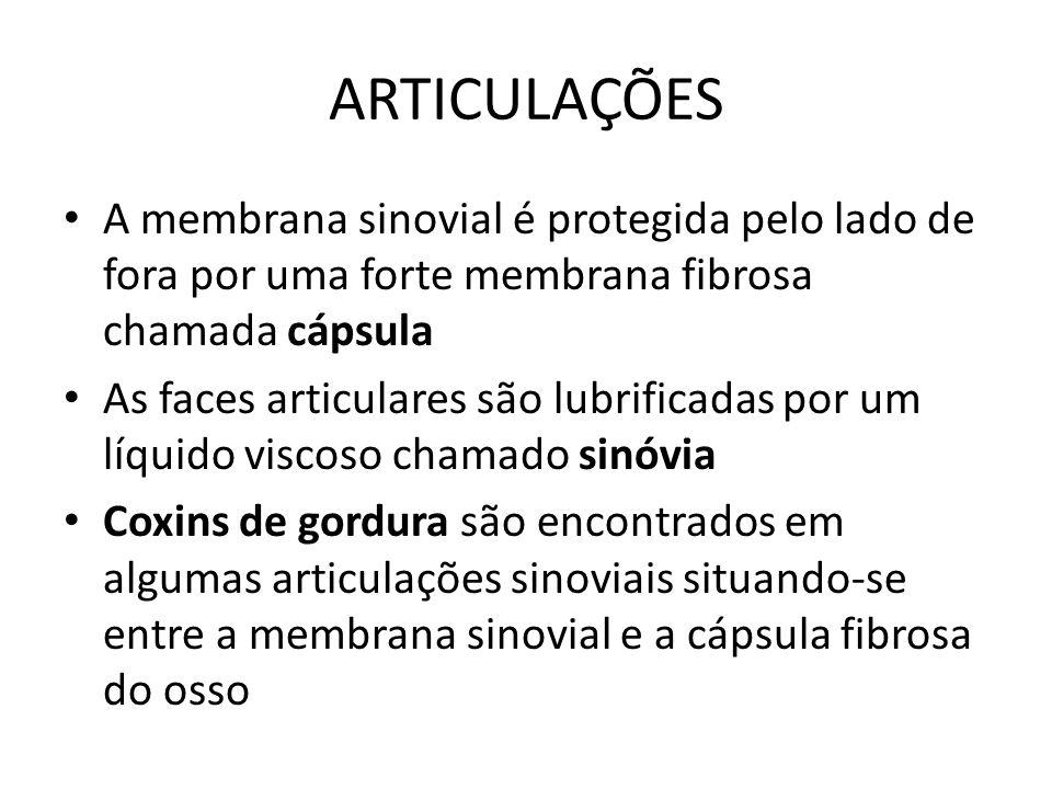ARTICULAÇÕES A membrana sinovial é protegida pelo lado de fora por uma forte membrana fibrosa chamada cápsula.