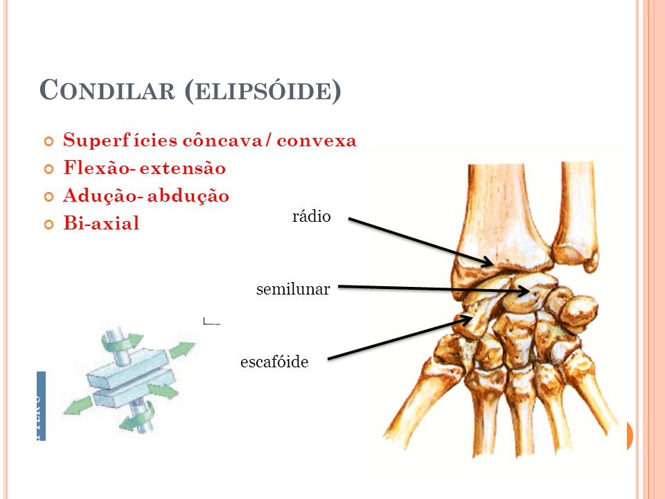 Condilar (elipsóide) Superf ícies côncava / convexa Flexão- extensão