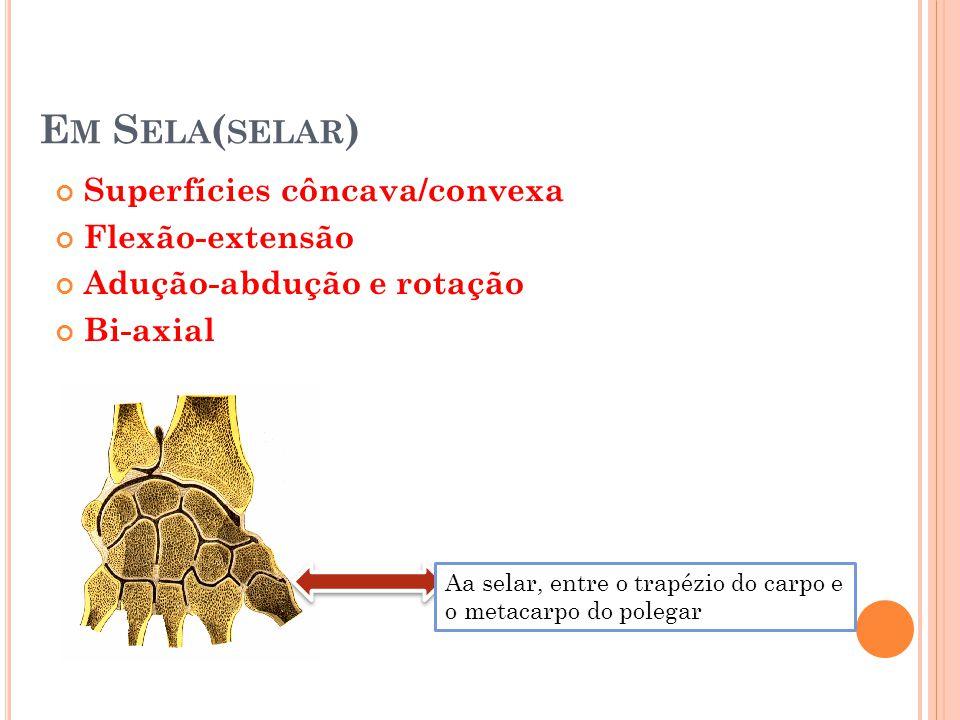 Em Sela(selar) Superfícies côncava/convexa Flexão-extensão