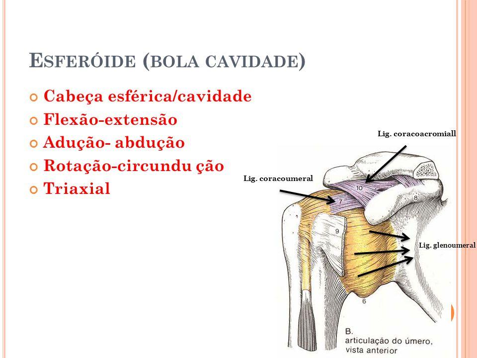 Esferóide (bola cavidade)