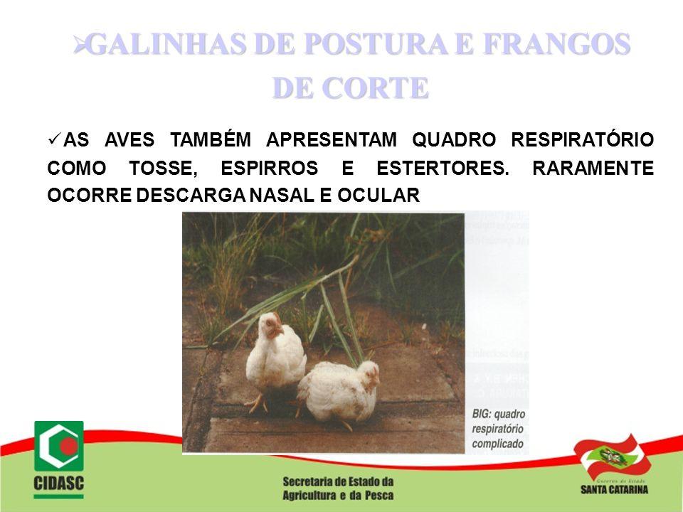 GALINHAS DE POSTURA E FRANGOS DE CORTE