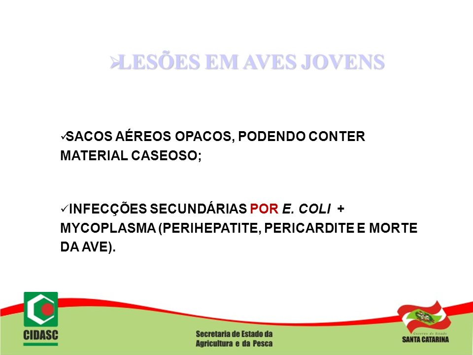 LESÕES EM AVES JOVENS SACOS AÉREOS OPACOS, PODENDO CONTER MATERIAL CASEOSO;