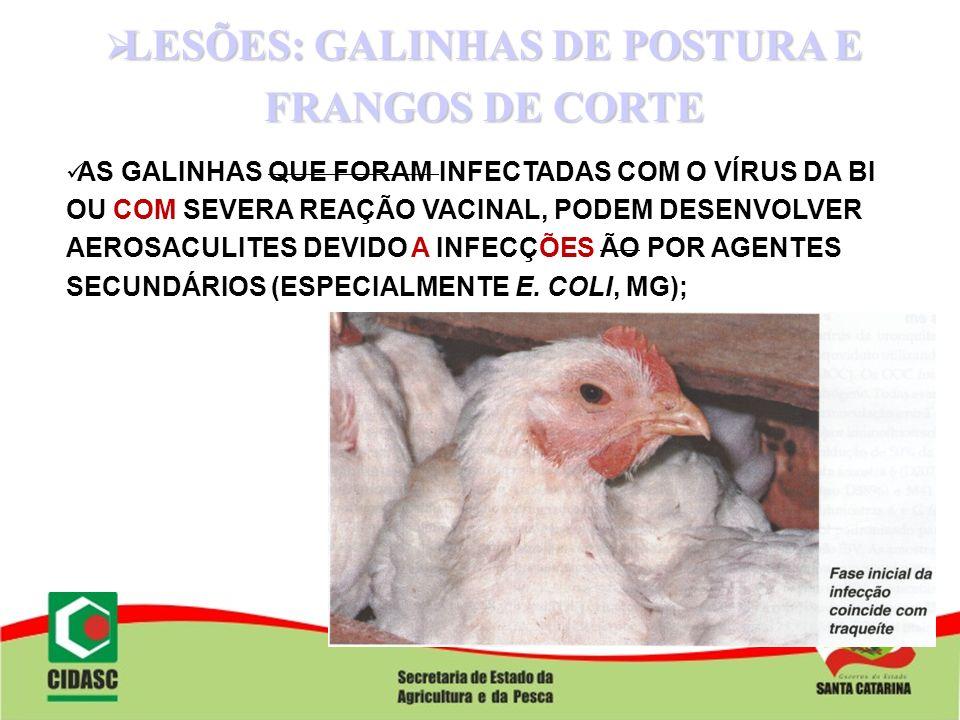 LESÕES: GALINHAS DE POSTURA E FRANGOS DE CORTE