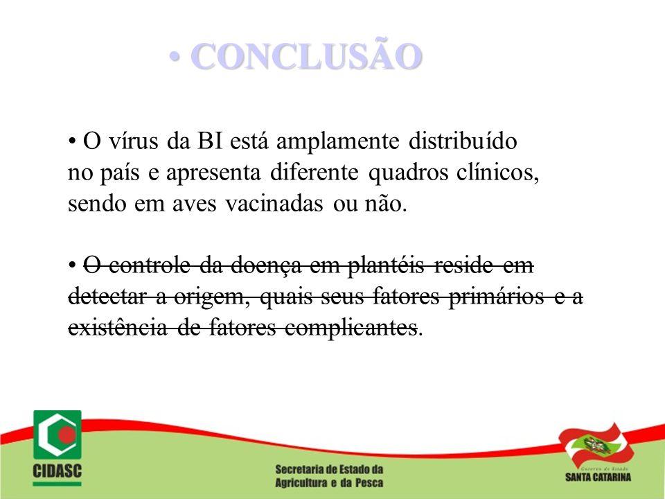 CONCLUSÃO O vírus da BI está amplamente distribuído