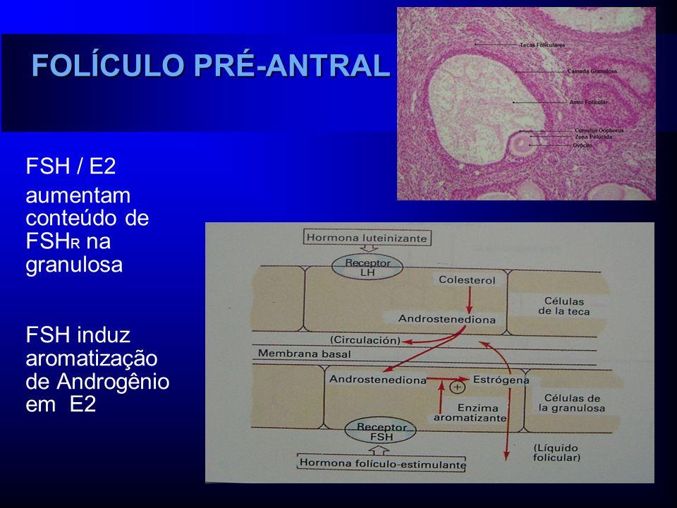 FOLÍCULO PRÉ-ANTRAL FSH / E2 aumentam conteúdo de FSHR na granulosa