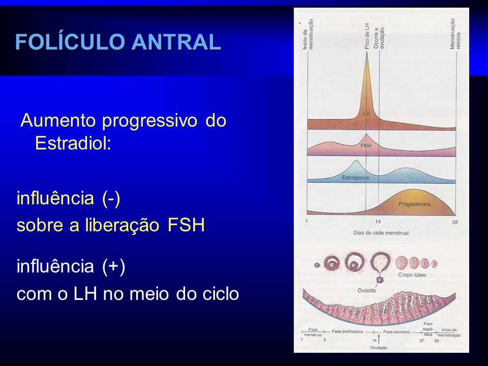 FOLÍCULO ANTRAL Aumento progressivo do Estradiol: influência (-)