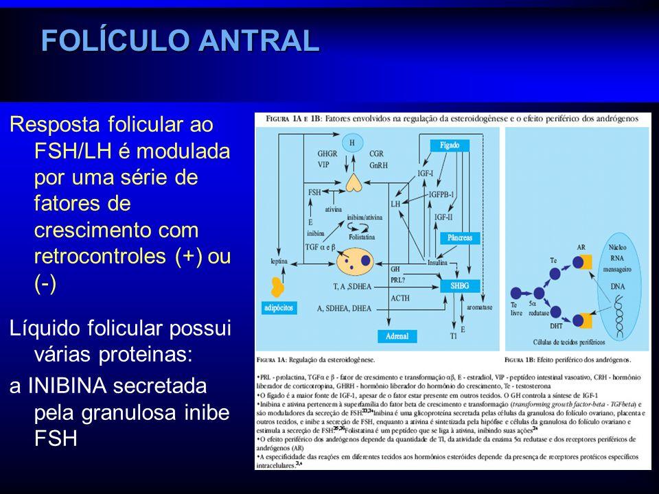 FOLÍCULO ANTRAL Resposta folicular ao FSH/LH é modulada por uma série de fatores de crescimento com retrocontroles (+) ou (-)