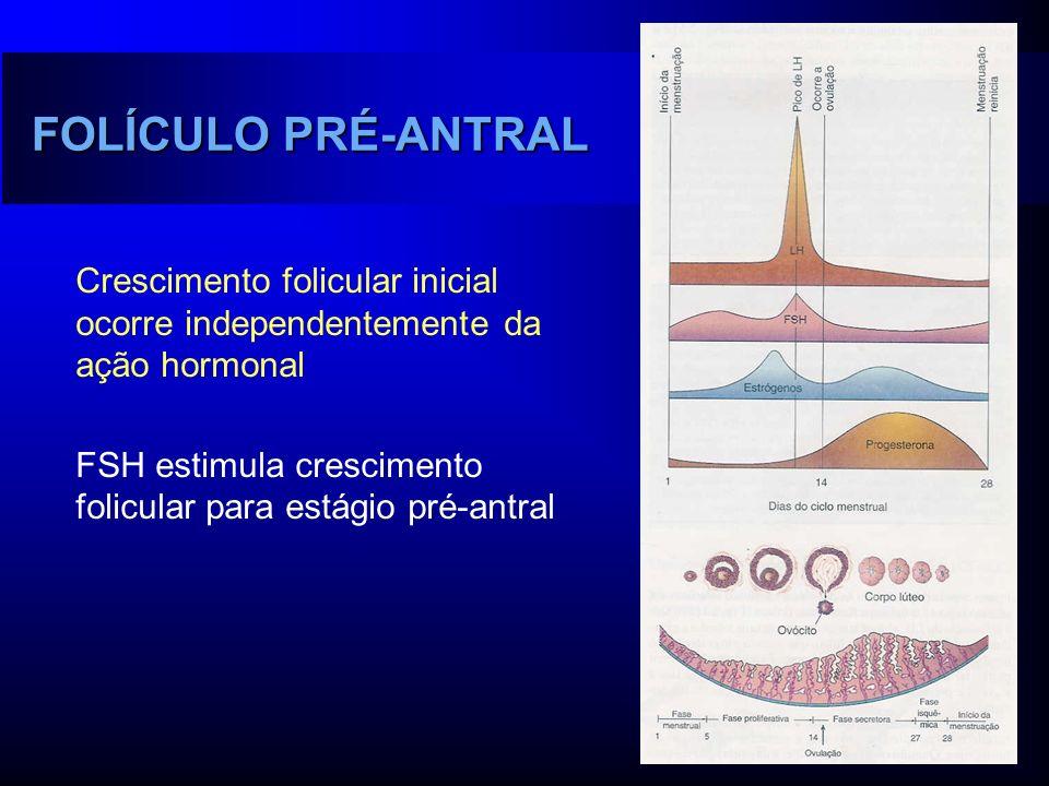 FOLÍCULO PRÉ-ANTRAL Crescimento folicular inicial ocorre independentemente da ação hormonal.