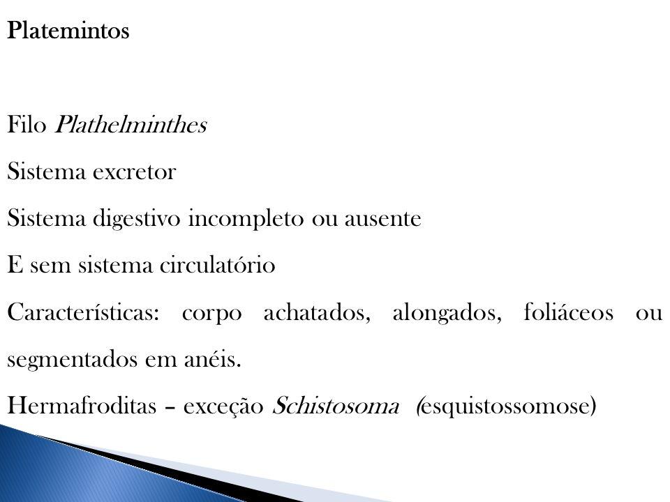 Platemintos Filo Plathelminthes. Sistema excretor. Sistema digestivo incompleto ou ausente. E sem sistema circulatório.