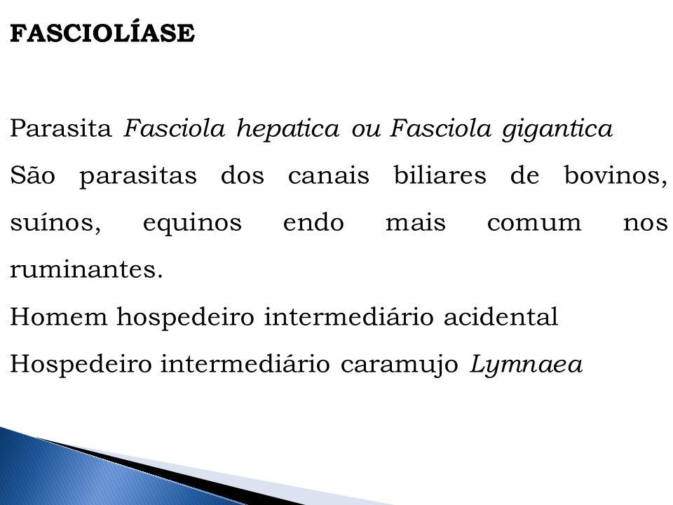 FASCIOLÍASE Parasita Fasciola hepatica ou Fasciola gigantica.