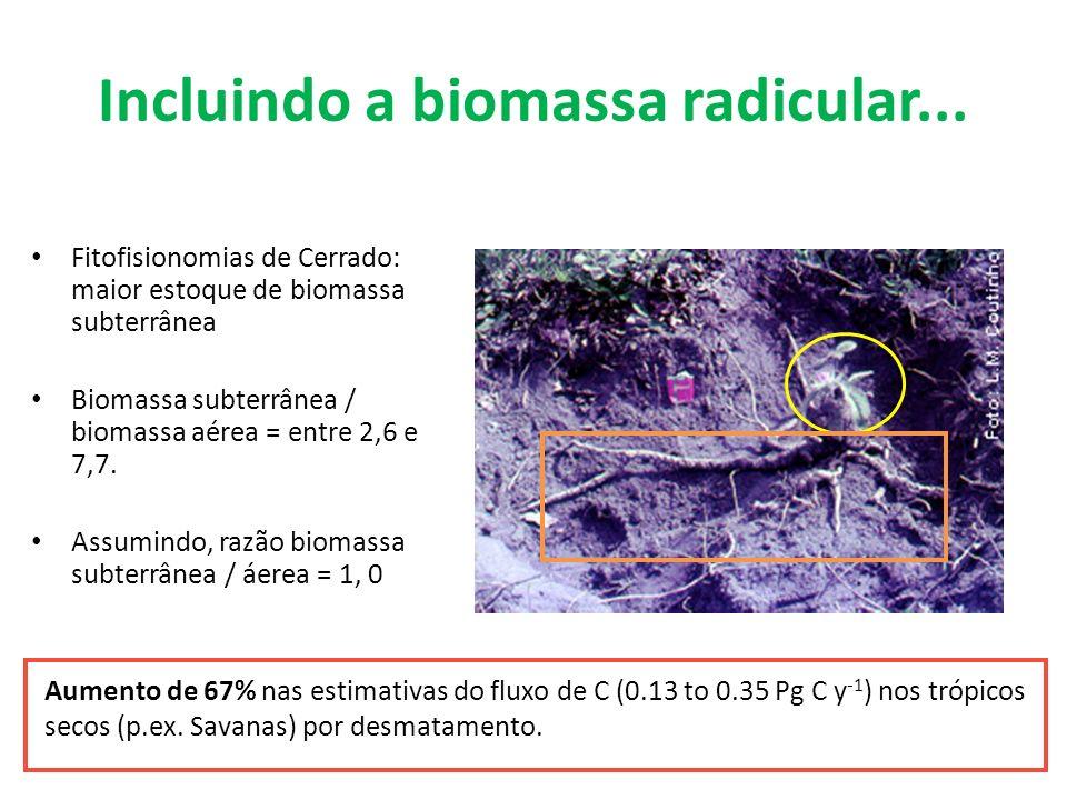 Incluindo a biomassa radicular...