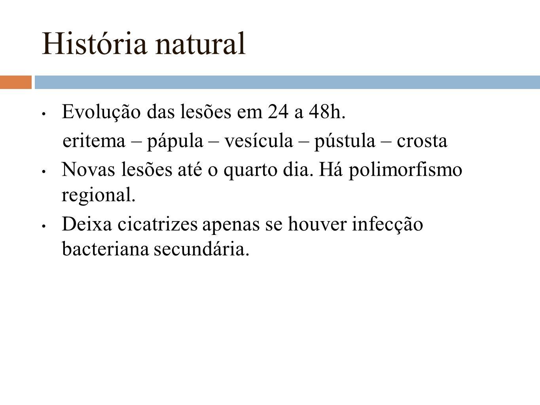 História natural Evolução das lesões em 24 a 48h.