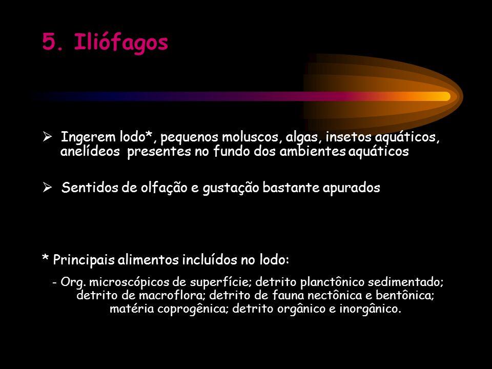 5. Iliófagos  Ingerem lodo*, pequenos moluscos, algas, insetos aquáticos, anelídeos presentes no fundo dos ambientes aquáticos.