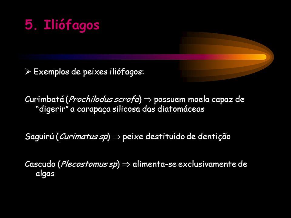 5. Iliófagos  Exemplos de peixes iliófagos: